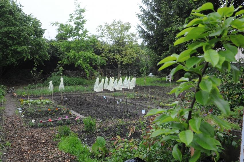 Ville de metz un nouveau jardin partag magny for Jardin fabert metz
