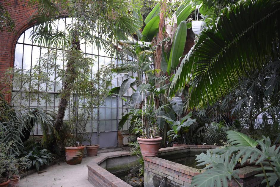 Ville de metz immersion tropicale dans les serres du jardin botanique for Jardin fabert metz