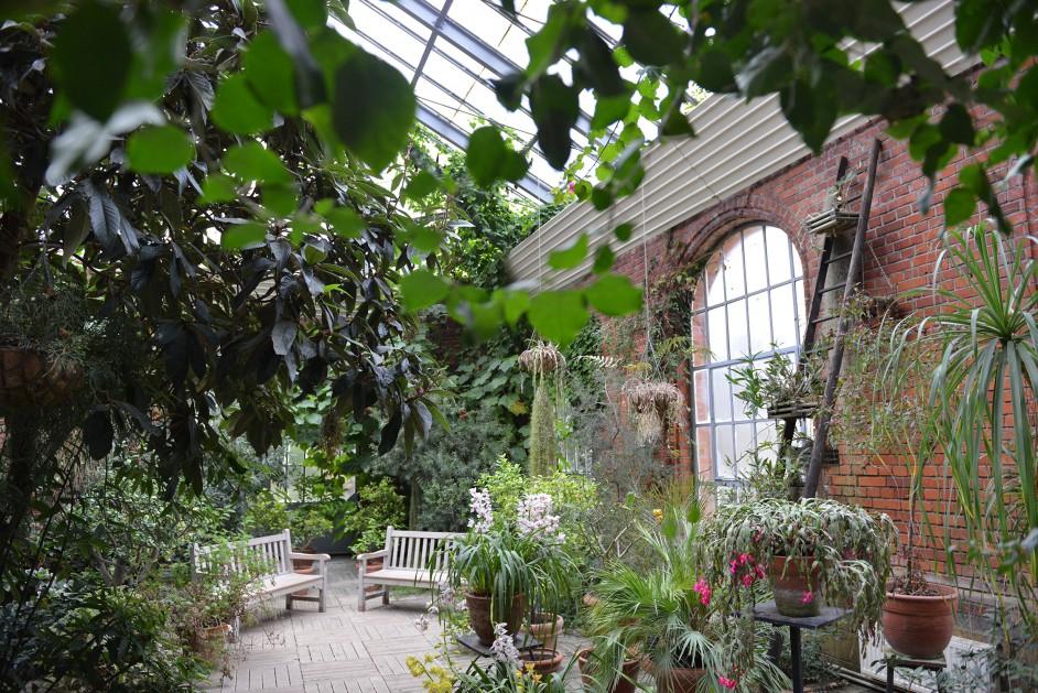 ville de metz immersion tropicale dans les serres du jardin botanique. Black Bedroom Furniture Sets. Home Design Ideas